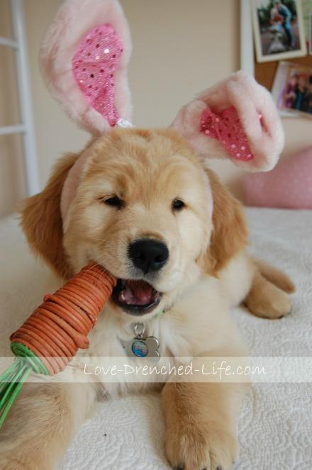 linus bunny2