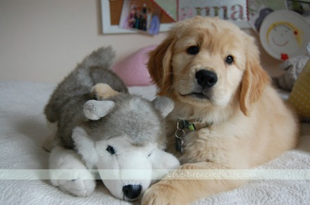 linus dog