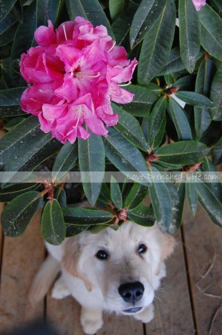 Anna flower