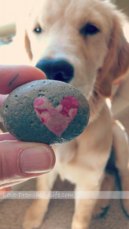 linus and love rock