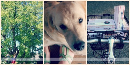 happiness journal tree dog bike