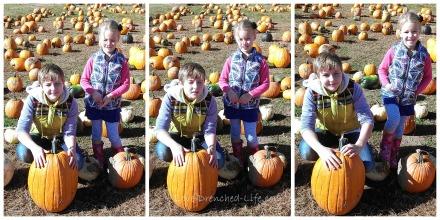 Pumpkin picutre
