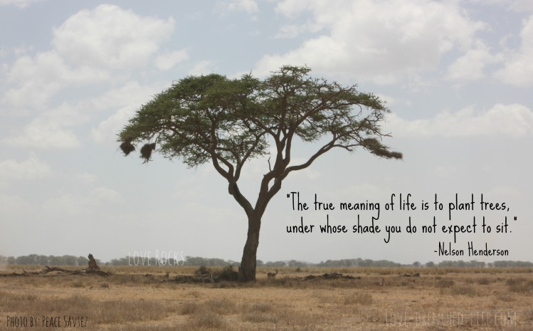 This quote was written in the card from the 5th grade teacher and the tree was one we saw when we were in Africa.