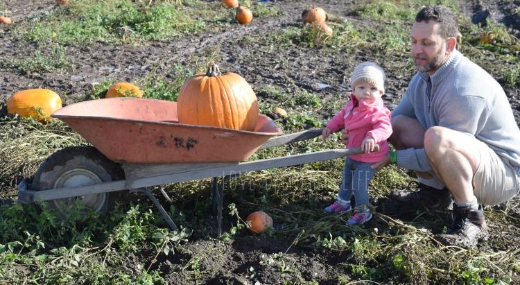 pumpkin-patch-2016-2